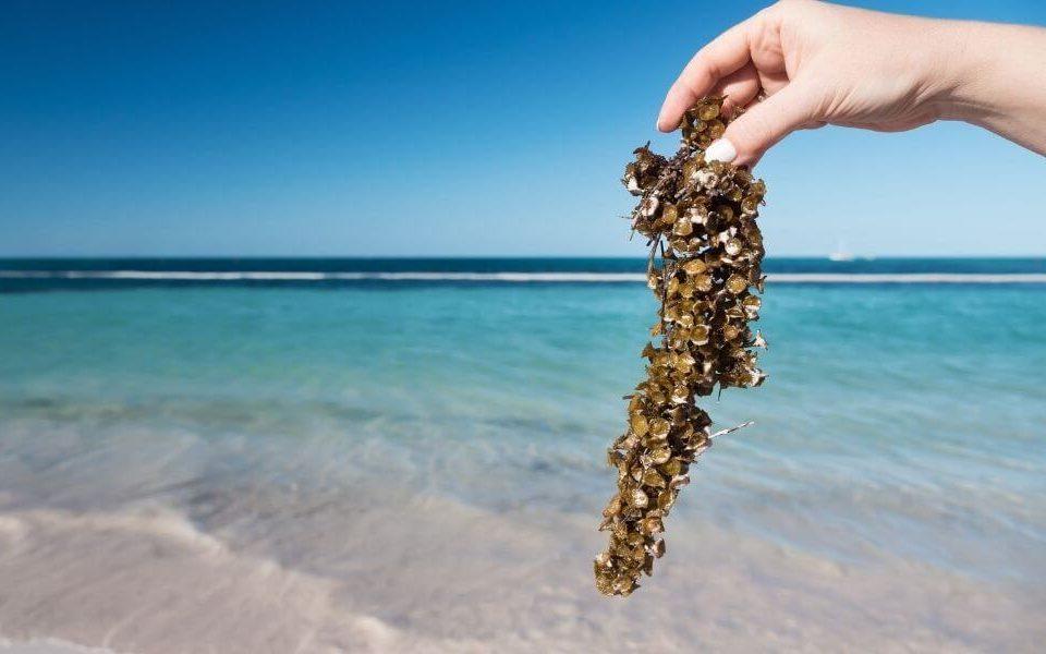 Playas sin Sargazo en Isla Mujeres
