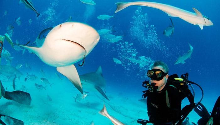 cave of sleeping sharks