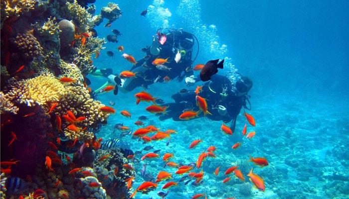 banderas reef