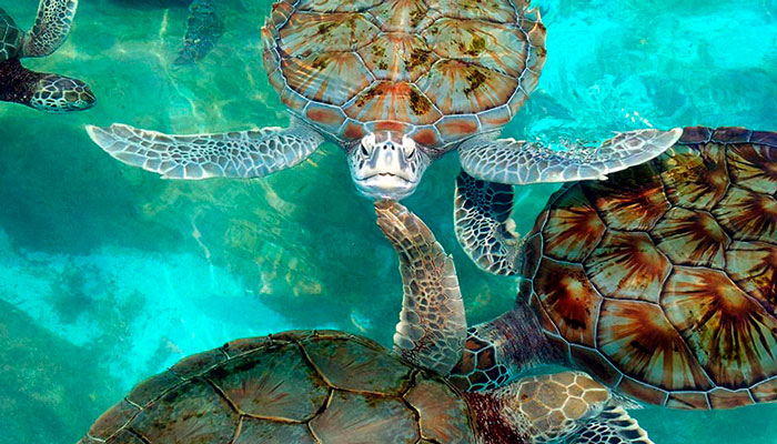 Turtle Farm in Isla Mujeres
