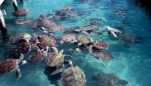 Turtle interaction in Isla Mujeres