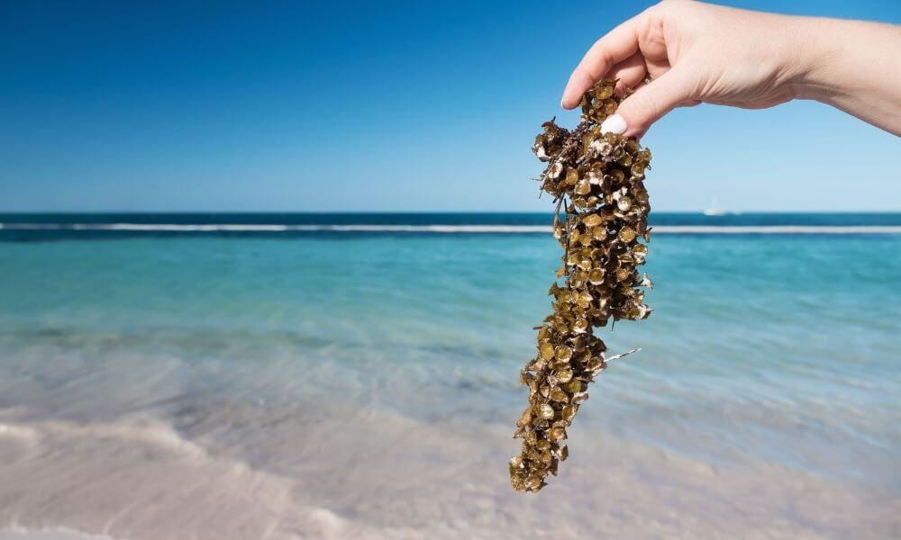 Sargassum-free beaches in Isla Mujeres