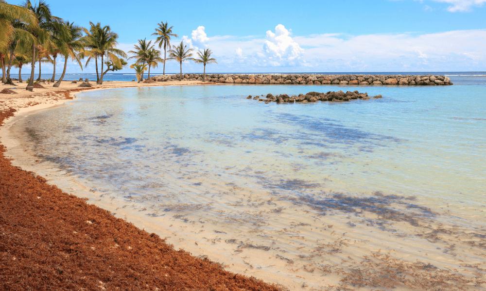 Sargassum beaches in Riviera Maya