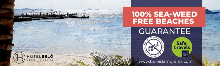 Beach Free Sea Weed Isla Mujeres